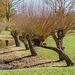 Vorfrühling im Britzer Garten