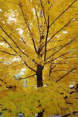 Final foliage (Explored)