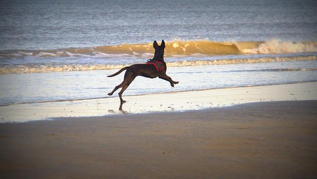 Je cours ...........je vole ..........je découvre les vagues .......