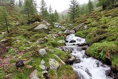 Gebirgsbach im Ultental