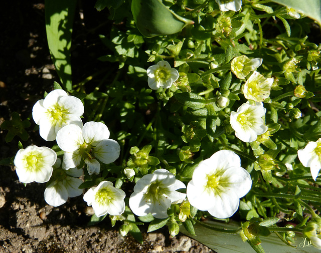 ** Minis fleurs **