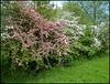 may in May