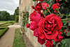 Les roses du château d'Azay-le-Ferron