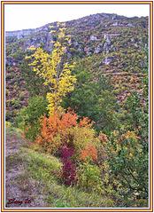Couleurs d'automne (8)