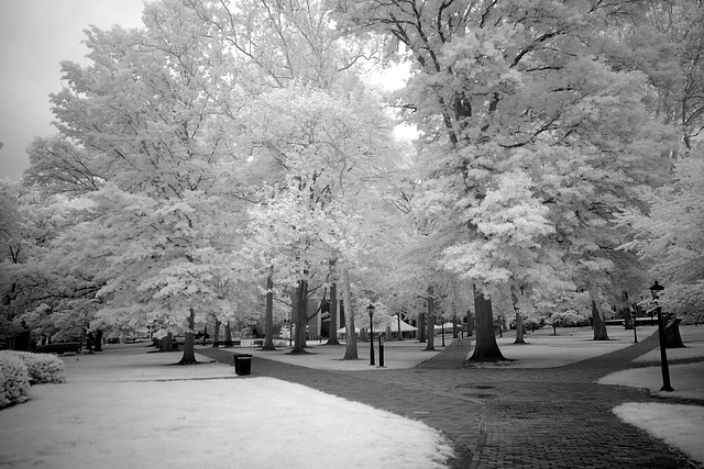 Gray day infrared II