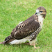 Cathedral falconry 6