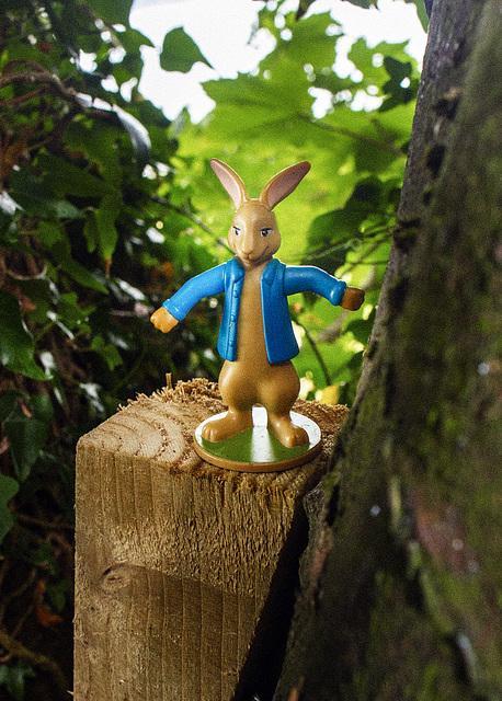 Rabbit in a Blue Shirt