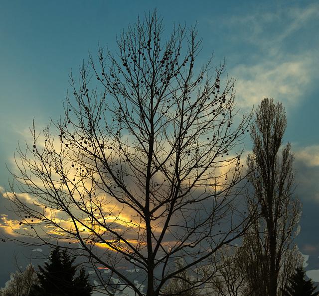 1 (36)austria autumn..tree with sunrise