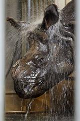 Sani unter der Dusche (Wilhelma)