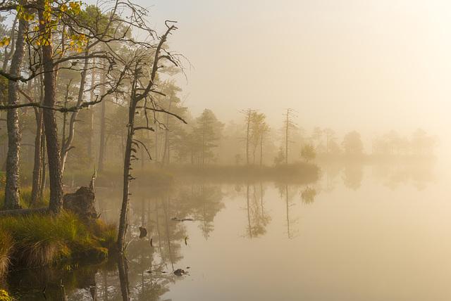 Brouillard matinal en Estonie