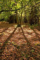 Gosforth Woods