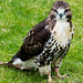 Cathedral falconry 17
