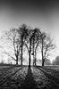 Contre jour trees