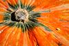 Herbstzeit - Kürbiszeit