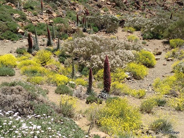 Teide (2)
