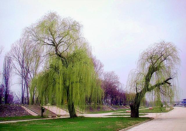 Spring next to Sava river
