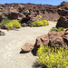Teide (3)
