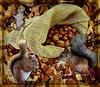 Le repas des écureuils