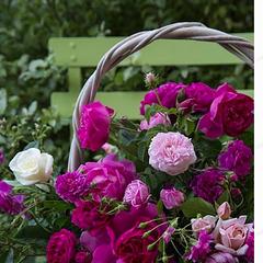 Jacques Brel chante : Pour un peu de tendresse