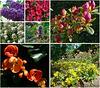 Nederland - Apeldoorn, my garden