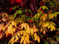 Des feuilles colorées...
