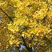 l'automne en or