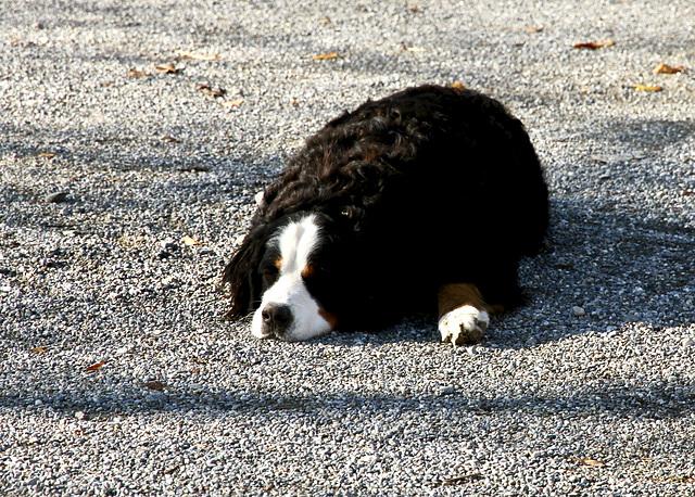 Der 'Wachhund'