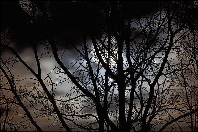 Mond hinter Bäumen