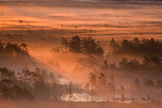Estonie dans les brumes matinales