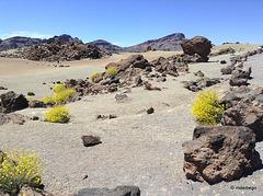 Teide (5)
