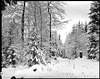 Winter am Rothaarsteig
