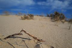 Flirt on the beach, Monte Gordo