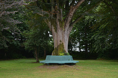 Beech Hill Country House, Bench around the Tree