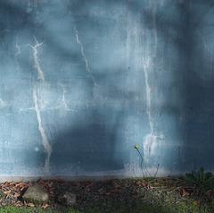 blue wall-2