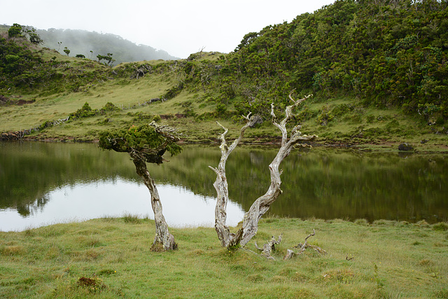 Azores, Lake in the Overgrown Lava Fields of the Pico Volcano