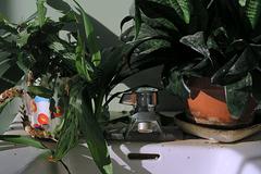 2 Plants & a Tap