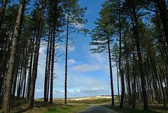 Nederland - Bergen aan Zee, Noordhollands Duinreservaat
