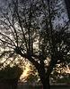 Auprès de mon arbre ...Au petit matin