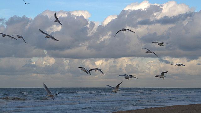 Dans le vent . . .