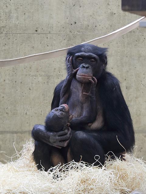Mutter und Kind (Wilhelma)