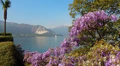 Verbania - Pallanza , i colori della primavera