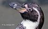 Penguin Profile 171 copy