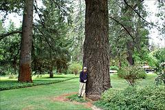 Mighty tree and a Homo sapiens sapiens