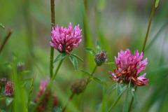 Champêtre : Petites fleurs