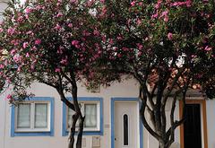 Nerium oleander, Castro Marim