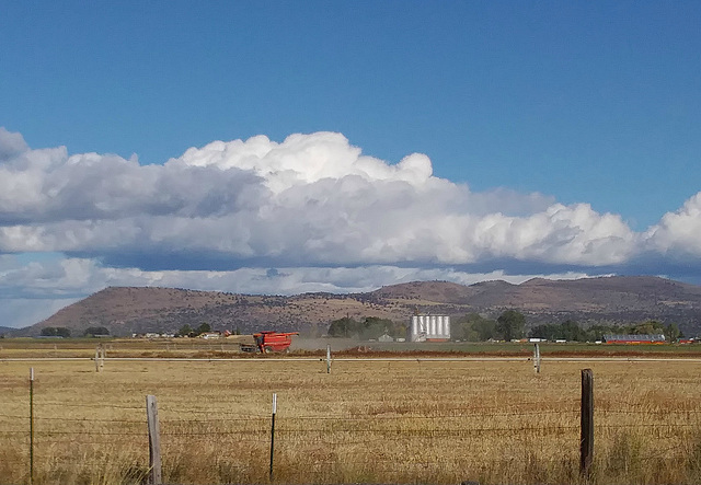 Farm on a windy day