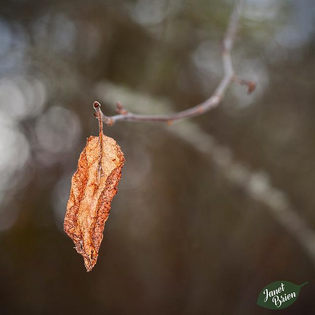 97/366: Dried Leaf