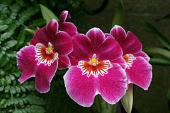Orchid-Colored Orchids