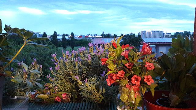 Il dolce crepuscolo sul parco..dal balcone