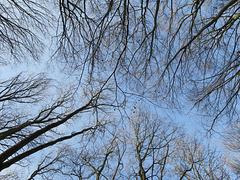 ... Der Blick nach oben ...
